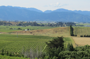 Auntsfield Vineyards