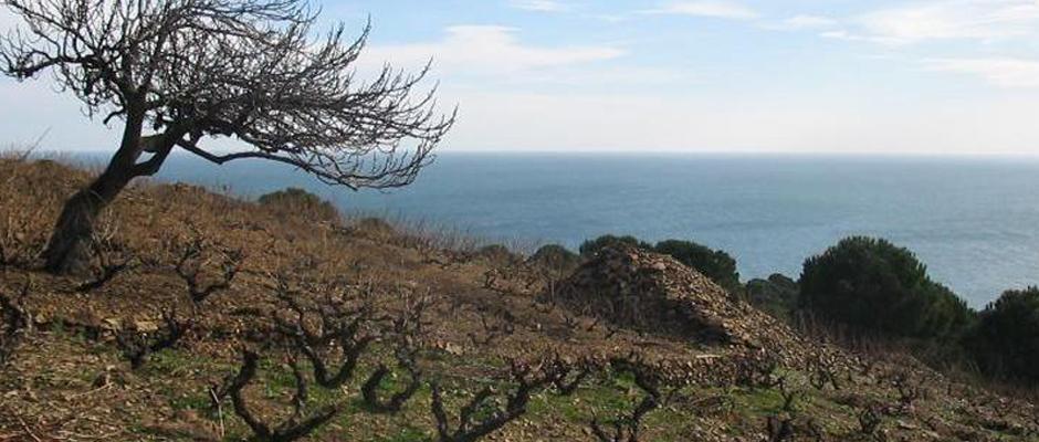 Domaine de Soulanes
