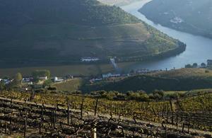 Orange River Vineyards